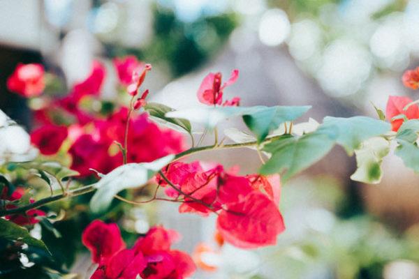 Gallery-flower-tulum-01